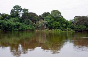 'nTipiese toneel in die Pantanal.Orals is water,water,water!